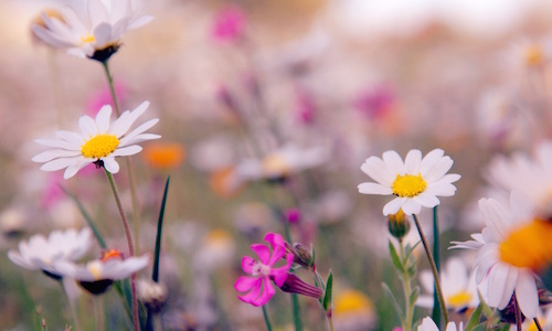 primavera musical